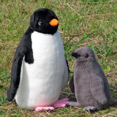 アデリーペンギンの画像 p1_1