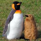 EUREKAオリジナルぬいぐるみ キングペンギン