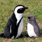 EUREKAオリジナルぬいぐるみ アフリカンペンギン