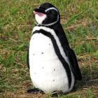 EUREKAオリジナルぬいぐるみ ガラパゴスペンギン