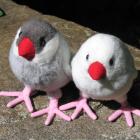 オリジナル制作ぬいぐるみ 鳥 文鳥(シナモン・白)