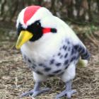 オリジナル制作ぬいぐるみ 鳥 アオゲラ
