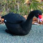 オリジナル制作ぬいぐるみ 鳥 黒鳥