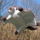 オリジナル制作ぬいぐるみ 哺乳類 カララ(ムササビ)